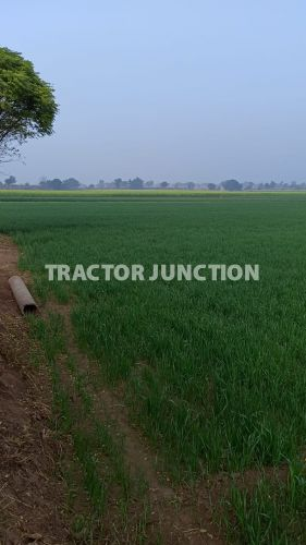 Agriculture Property